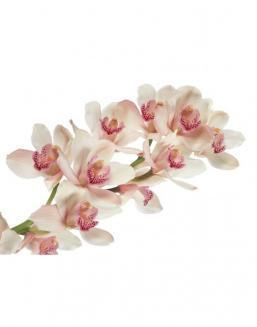 Bouquet of orchids on a branch | Delivery and order flowers in Aktobe