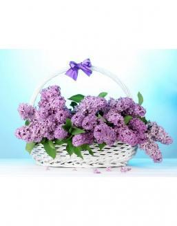 Bouquet of 15 violet lilac | Delivery and order flowers in Aktobe