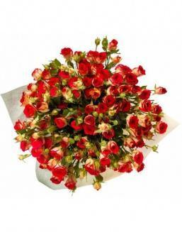 Bouquet of 101 red rose bushes | 101 roses expensive