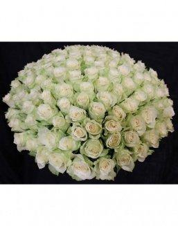 Bouquet of 101 white holland roses | Delivery and order flowers in Aktobe