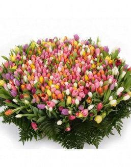 Mix bouquet 501 tulips | 501 flowers to beloved flowers